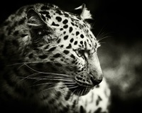7_10 AuthorAvatar_leopardicon