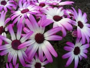 kilgore spring2012 039