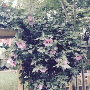7_28 garden